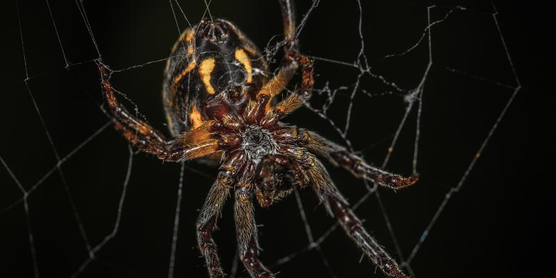 Common Household Spiders in New Jersey | Arkadia - Eco ...